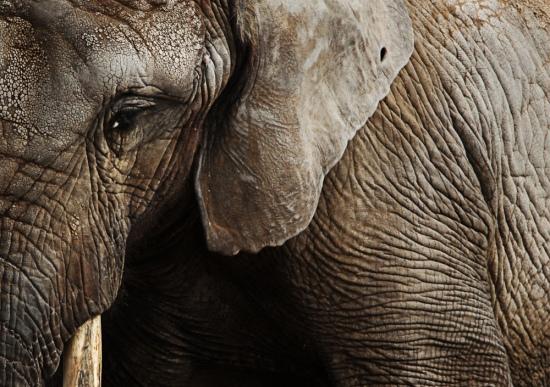 elephant_doug.kukurudza